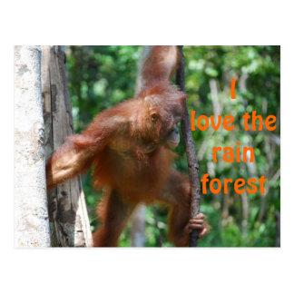 I Love the Rain Forest Postcard