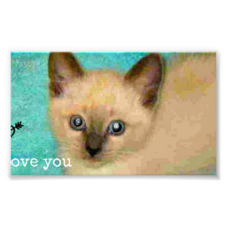 I love you siamese kitten photograph