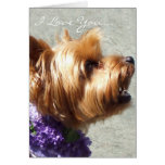 I Love You Yorkshire Terrier Greeting card
