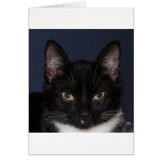 I LUV CATZ CARD