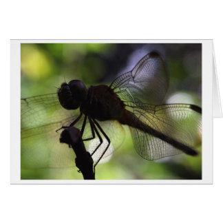 i m a butterfly greeting card