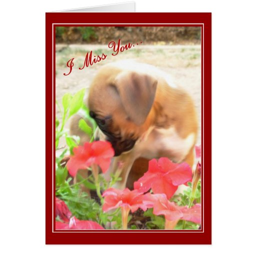 I Miss you boxer puppy greeting card