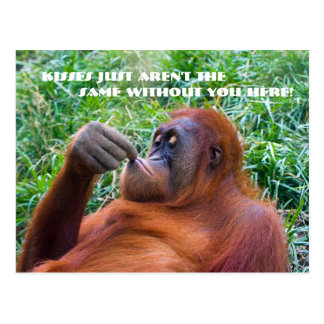 I Miss You Funny Orangutan Postcard