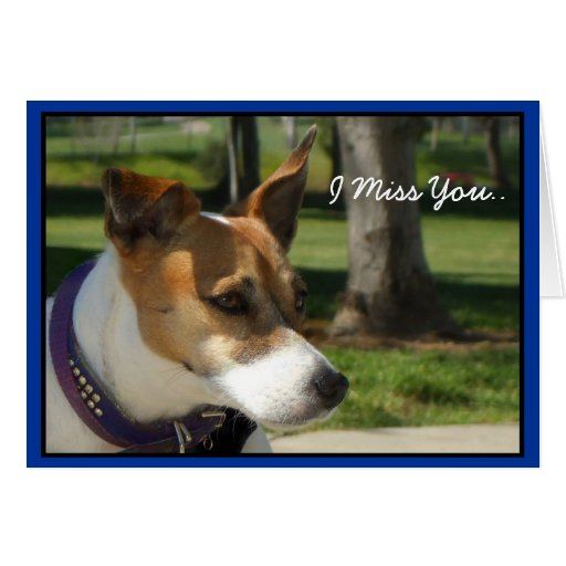 I Miss you Jack Russell Terrier greeting card