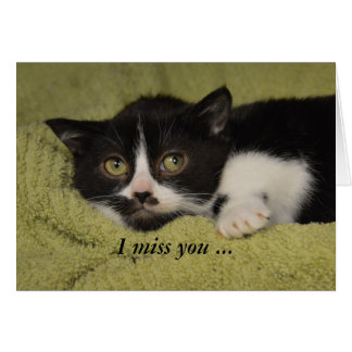 I Miss You, Shy Tuxedo Kitten Card