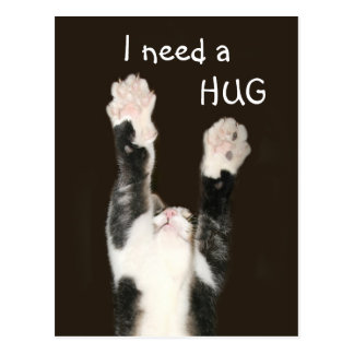 I need a hug kitty postcard