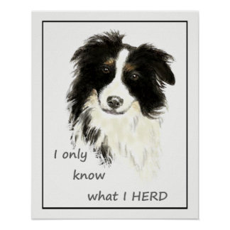 """""""I only know what I HERD"""" """"Border Collie"""" quote Poster"""