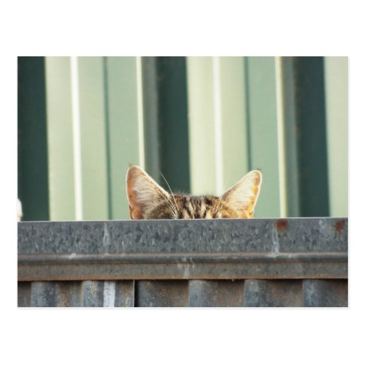 I SAW A KITTY CAT POST CARD