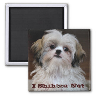 I Shihtzu Not funny shih tzu fridge magnet