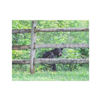 I Spotted a Bear! Stretched Canvas Print