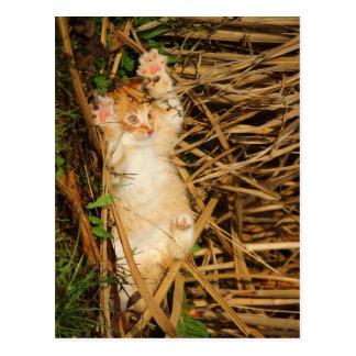 """I surrender"" kitty Postcard"