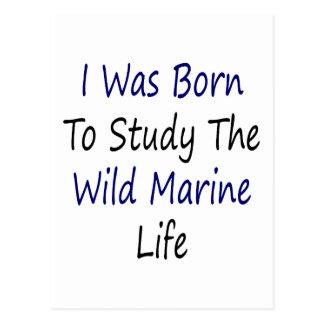 I Was Born To Study The Wild Marine Life Postcard