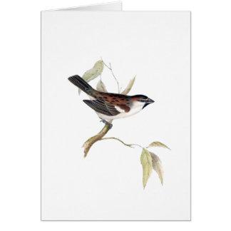 Iago Sparrow Card