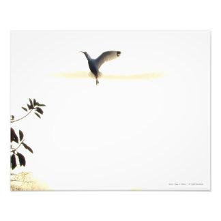 Ibis Ballet in Flight Photo Print