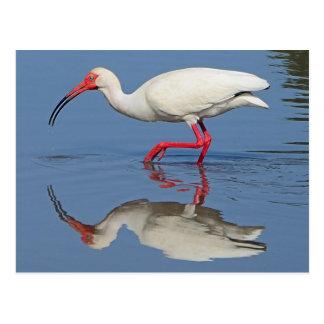Ibis Coastal Bird Postcard