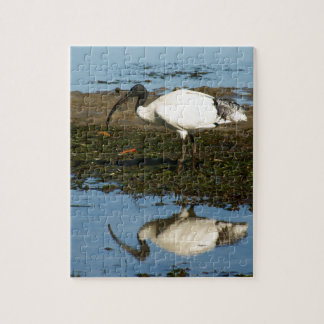 Ibis Jigsaw Puzzle
