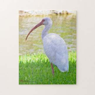 Ibis On One Leg Photograph Jigsaw Puzzle
