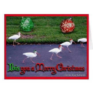 Ibis You a Merry Christmas Card