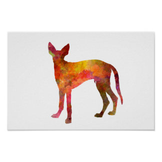 Ibizan Hound in watercolor Poster