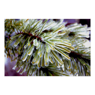 Ice Coated Pine Poster