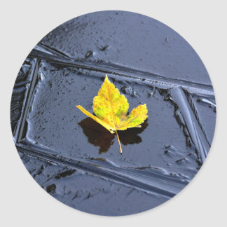 Ice in the pond with yellow maple sheet, ice form, round stickers