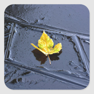 Ice in the pond with yellow maple sheet, ice form, square stickers