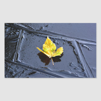 Ice in the pond with yellow maple sheet, ice form, rectangular stickers