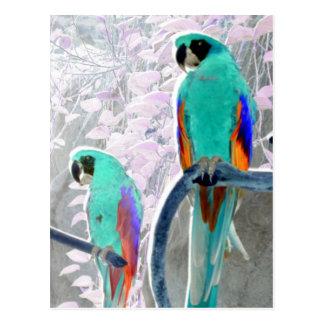 Ice Parrots Postcard