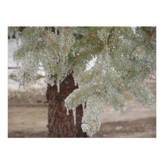 Ice Pine Needles Photo Print