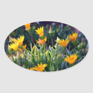 Ice Plant Oval Stickers