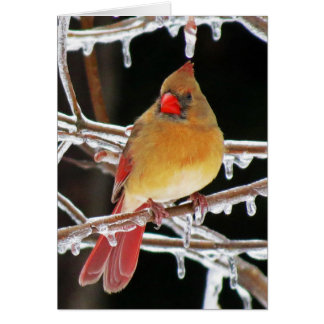 Ice Princess - Female Cardinal Bird Card