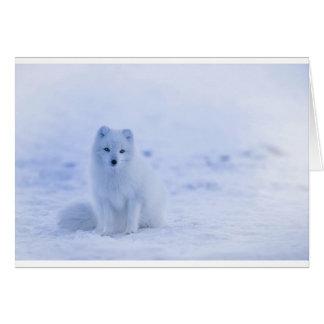 Iceland Arctic Fox Card