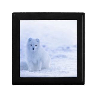 Iceland Arctic Fox Gift Box