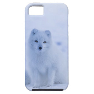 Iceland Arctic Fox iPhone 5 Case