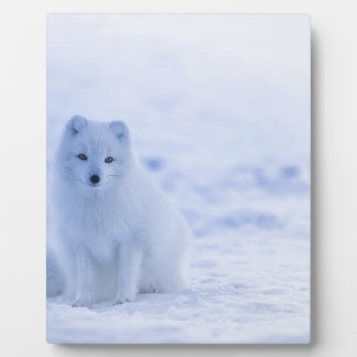 Iceland Arctic Fox Plaque
