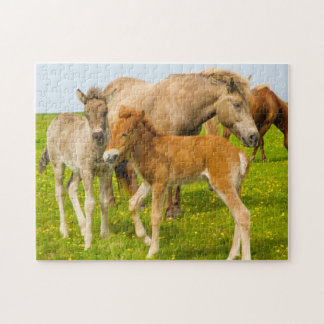 Iceland. Dyrholaey. Icelandic horse foals Jigsaw Puzzle