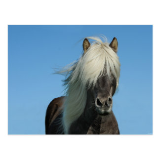 Iceland Horse Tourism Nature Beautiful Postcard