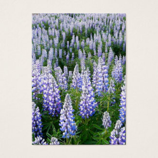 Iceland lupins bookmark
