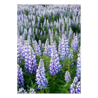 Iceland lupins bookmark pack of chubby business cards