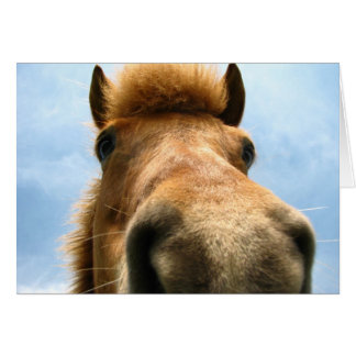 Iceland Pony Head Card