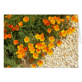 iceland poppies card