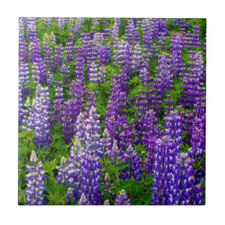 Iceland. Vik i Myrdal. Field of Lupines Small Square Tile