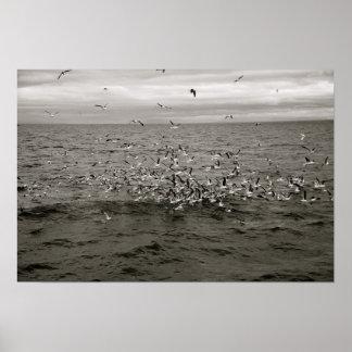 Icelandic flock of birds poster