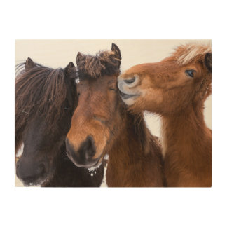 Icelandic Horse friends, Iceland Wood Wall Art