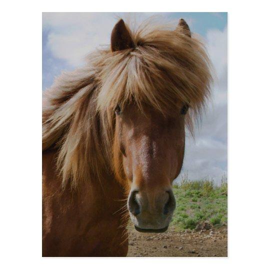 Icelandic Horse III Postcard