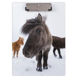 Icelandic Horse portrait, Iceland Clipboard