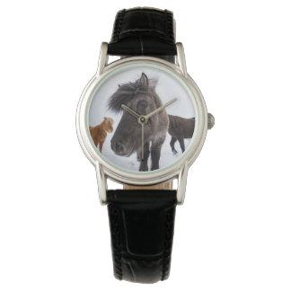 Icelandic Horse portrait, Iceland Watches
