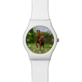 Icelandic Pony Tölt Funny Photo Horse - dial-plate Watch