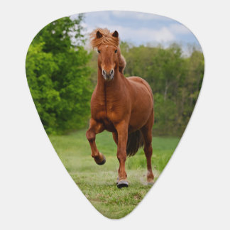 Icelandic Pony Tölt Funny Photo Horse - Plectrum