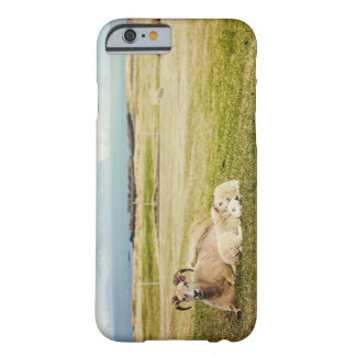 Icelandic Sheep iPhone 6 case Barely There iPhone 6 Case